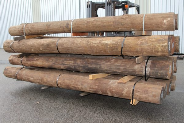 11. New Spotted Gum H4 ACQ Bush Pole (Medium)